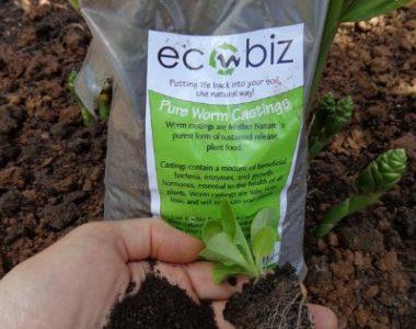 worm castings ecobiz zambia